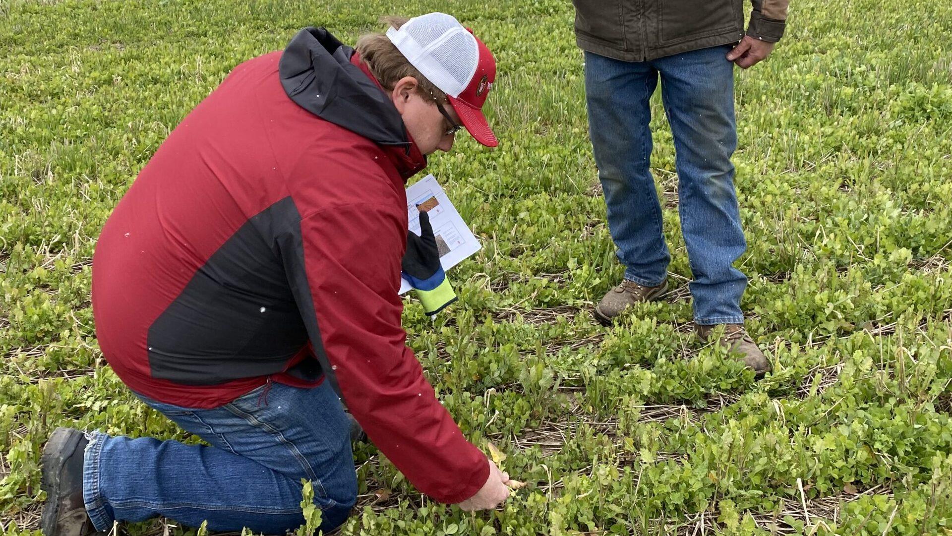 Sheboygan River Progressive Farmers dig into cover crop termination at field day